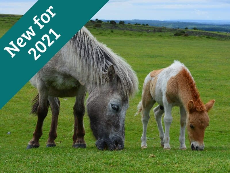 Holiday Cottages Devon - Holly 2021 - Little Dunley