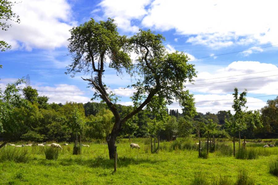 Holly Cottage Devon - Meadowlands - Little Dunley Cottages